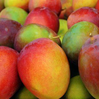 haden mangos