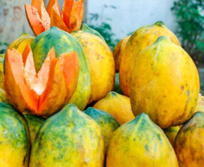 Red lady papaya gross